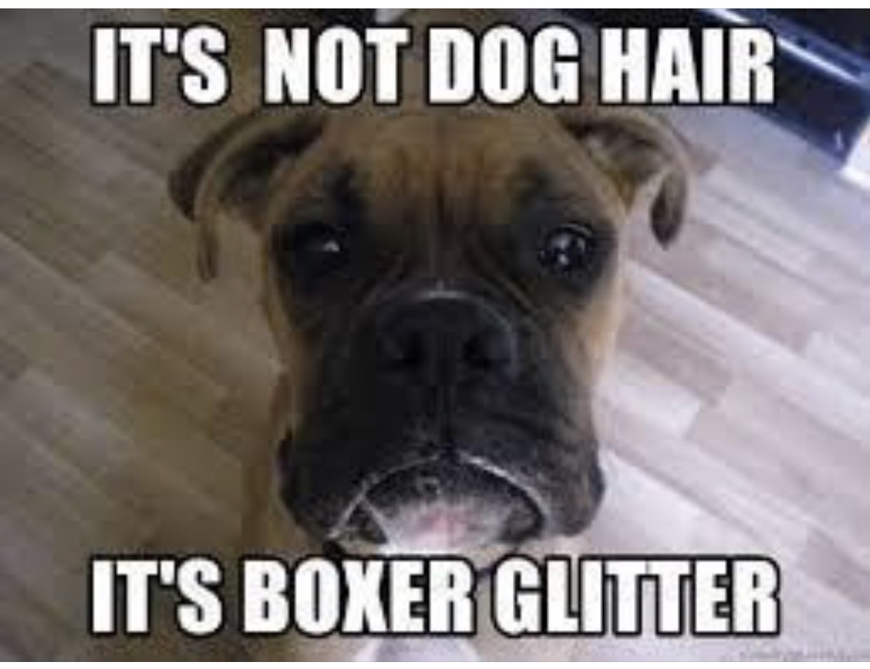 Pin By Patricia Pratt On Sayings Boxer Dogs Funny Boxer Puppies Boxer Dog Quotes