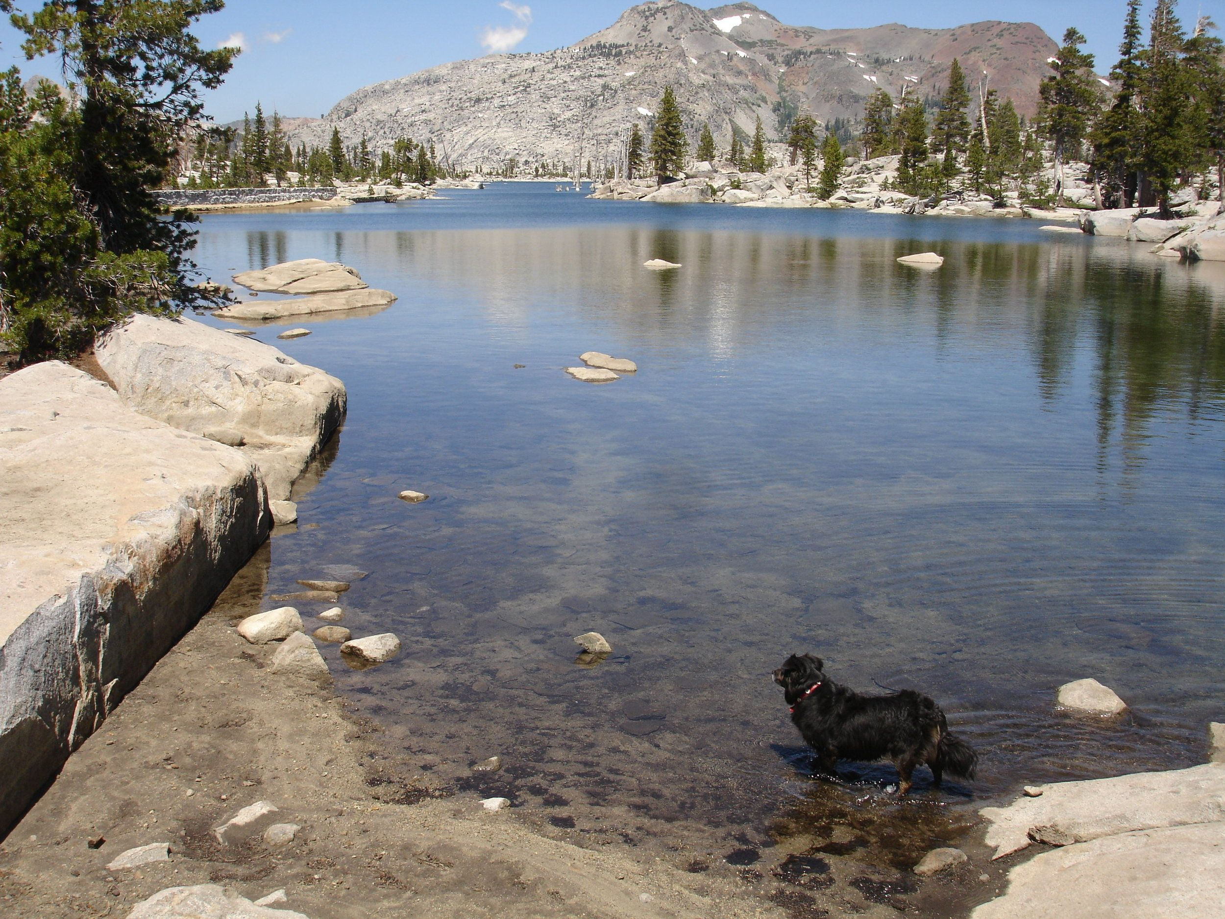 TOP 10 Dog Friendly Places in Lake Tahoe — LakeTahoe.com