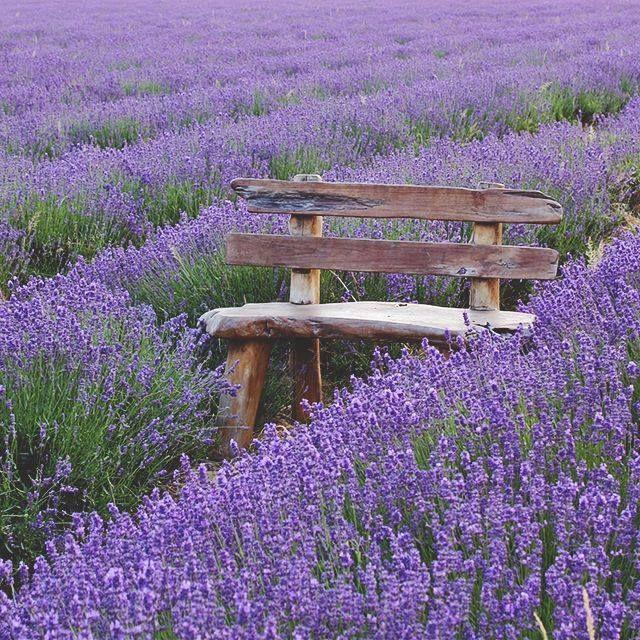 sit relax provence lavendel pinterest lavendel b nke und alte b nke. Black Bedroom Furniture Sets. Home Design Ideas