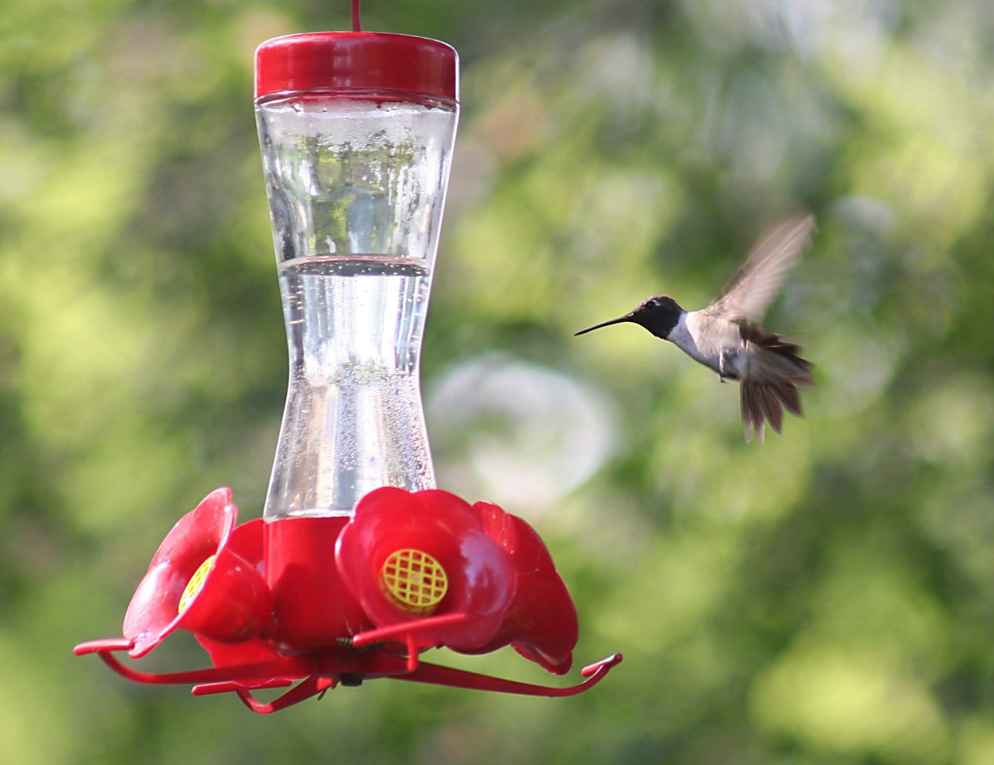 How To Make Hummingbird Food Recipe in 2020 Make