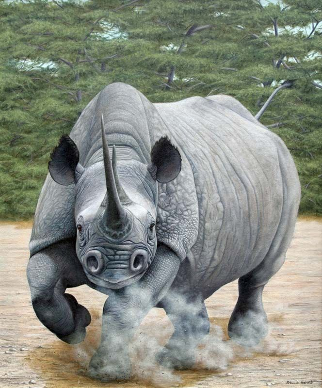 Charging Rhino ... dedicated to the bully girl who beat me up.  God give me strength to let it go, forgive the act but remember the lesson.