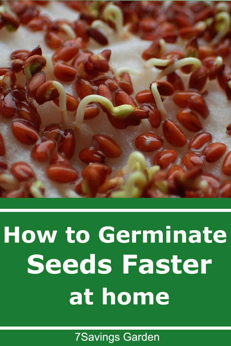 How to germinate seeds faster you can start growing
