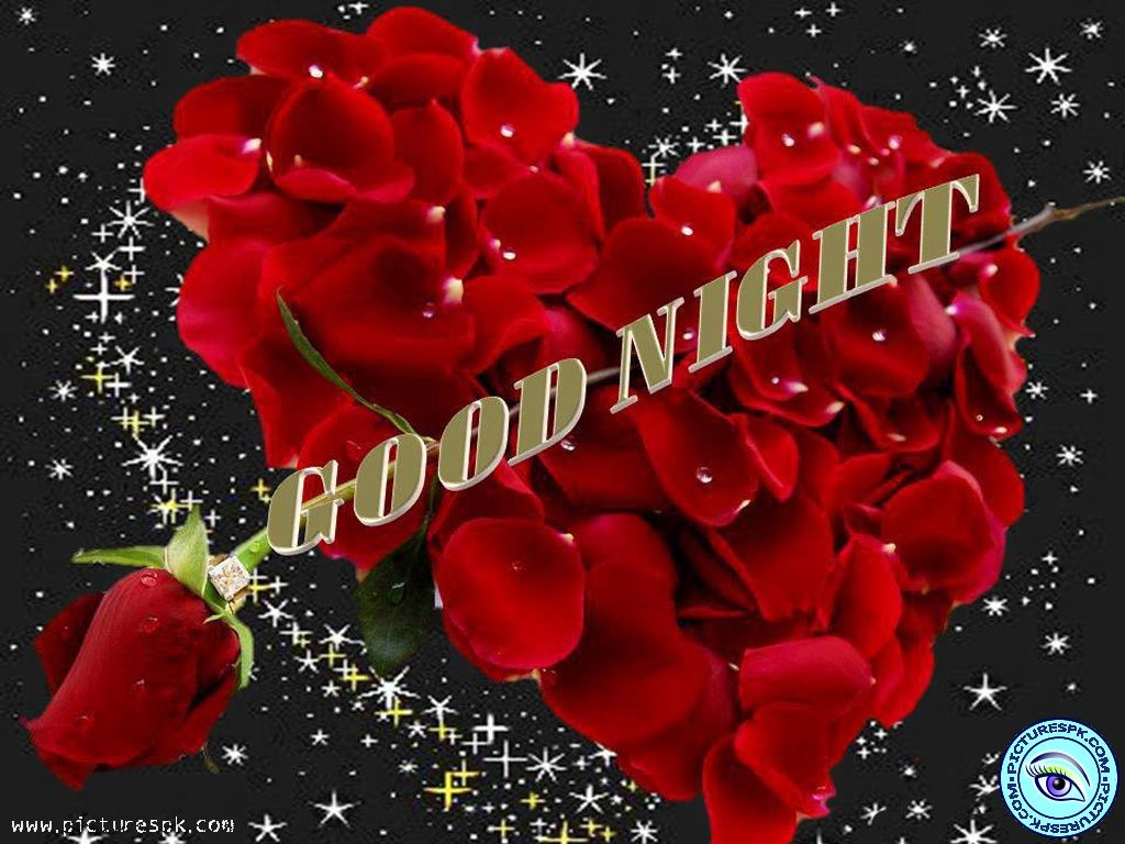 Wallpaper download good night - Buenas Noches Con Bellas Rosas View Good Night With Roses Picture Wallpaper In 1024x768 Resolution
