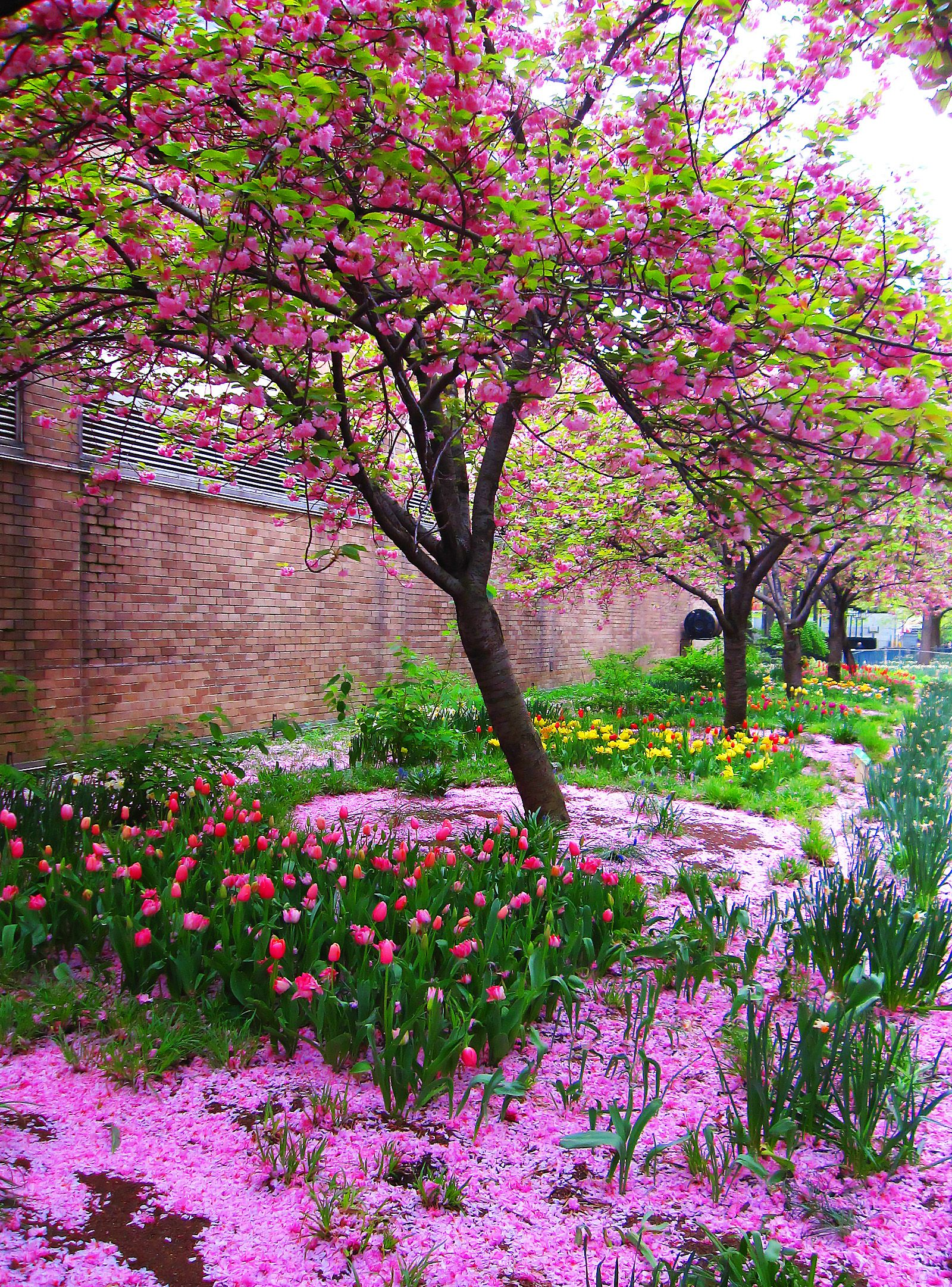 Pink D Beautiful Nature Pictures Spring Landscape Spring Scenery