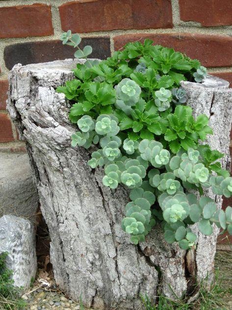 Fantastisch Deko Ideen Selbermachen Baumstumpf Pflanzen Kreative Gartenideen   Pinterest