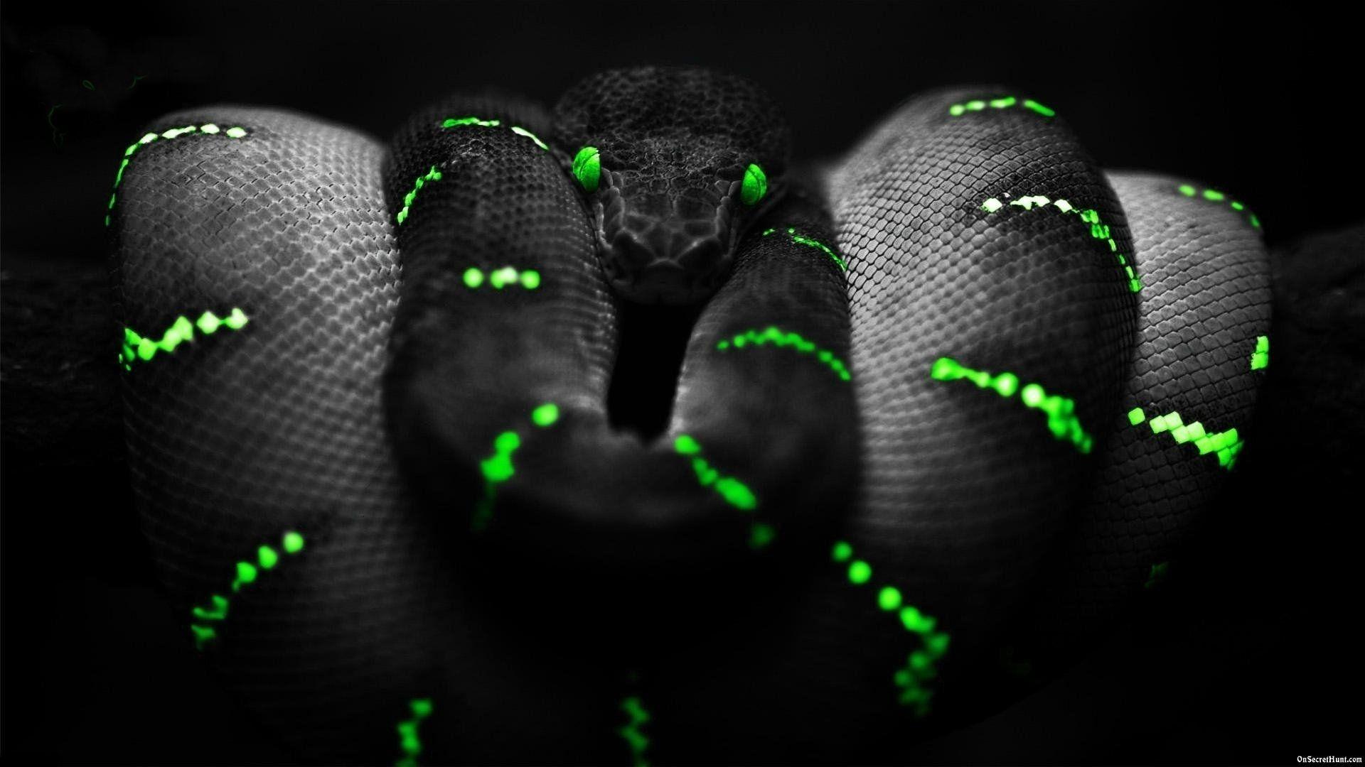 Best Gamer Wallpaper Images Gamer Wallpaper Snake Wallpaper