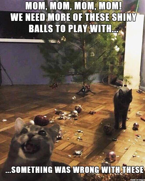 Cat Christmas Funny animal memes, Christmas cats, Funny