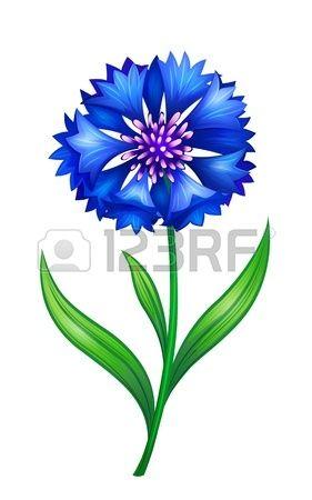 Blue Cornflower Scrapbook Flowers Digital Flowers Flower Art