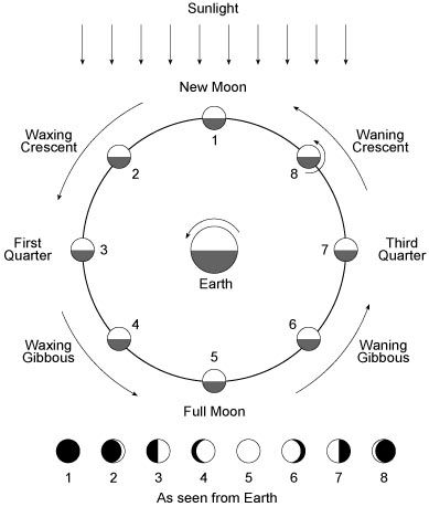 Phases Of The Moon Visual Image Scroll Down