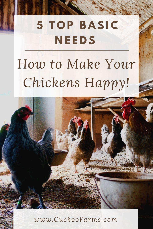 5 Top Chicken Basic Needs for a Happy Flock Diy chicken