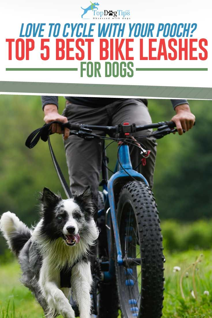 12 Best Dog Bike Leashes Hands Free Biking With Dog Dog Bike