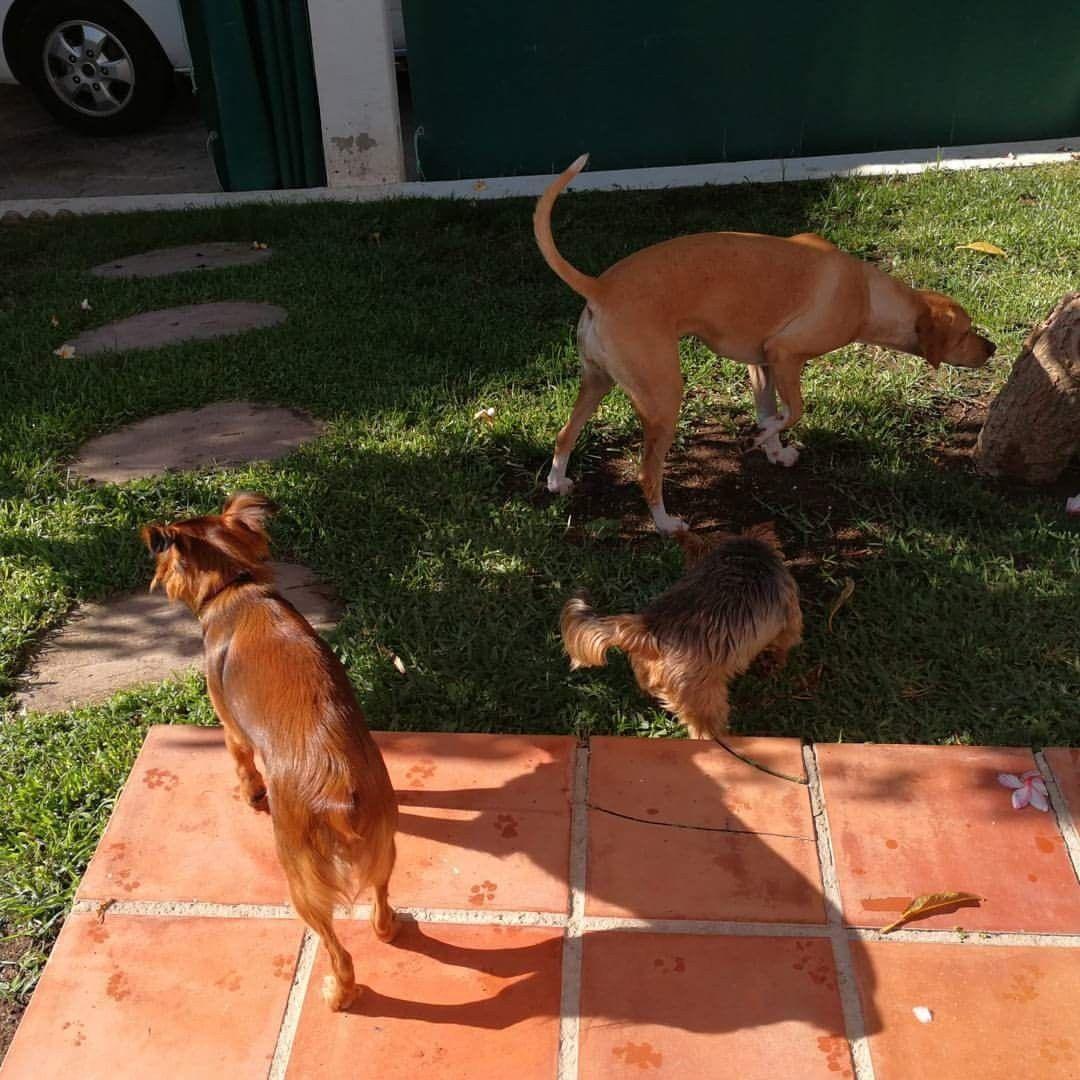 Ratos en casa con Penny y Taxi 06/17