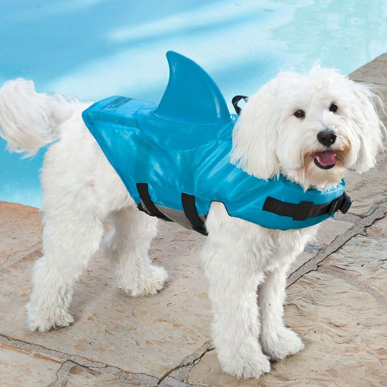 Shark Fin Life Jacket For Dogs Dog life vest, Dog life, Dogs