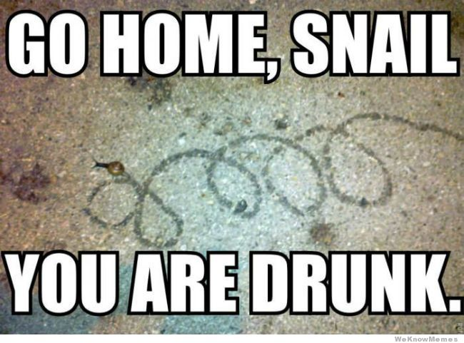 Funny Meme For Adults : Pin by liquorlist.com on humor liquorlist.com pinterest snail