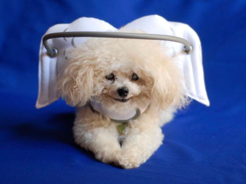Noah Drupal 10 Blind Dog Dog Safety Dogs