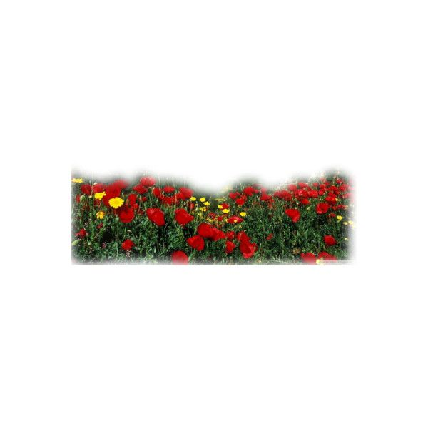 ❤ liked on Polyvore featuring flowers, tubes, backgrounds, art and faded