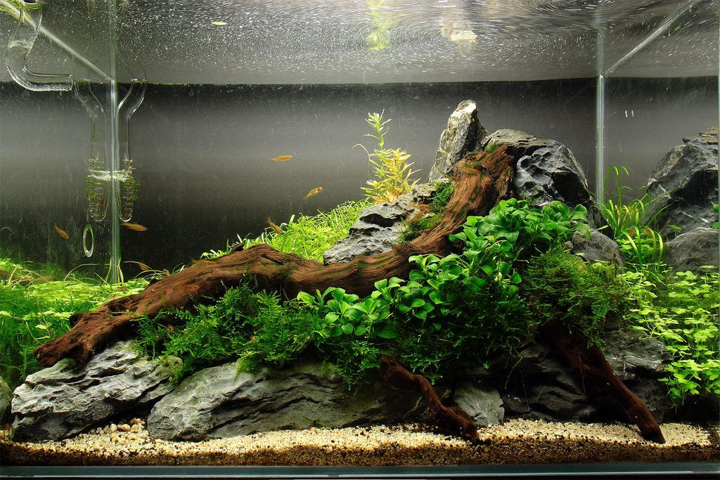 Planted Aquarium Nice Natural Flow Between The Wood Rock And