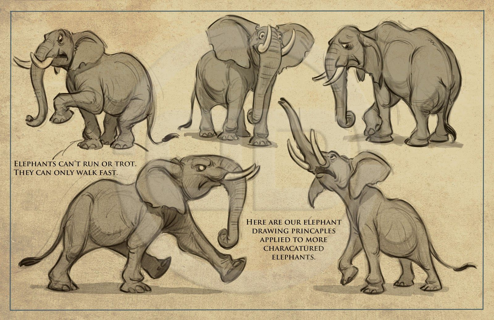 Tembo  How To Draw Elephants Packet I Created For The Crew