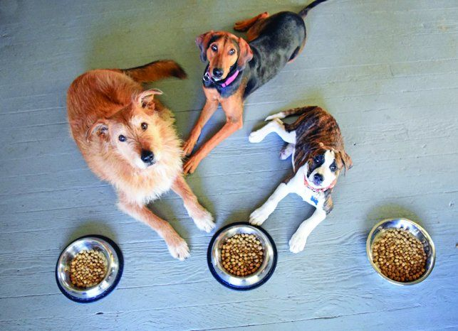 Addison S Disease Adding Real Foods Canned Plants Dogs Your