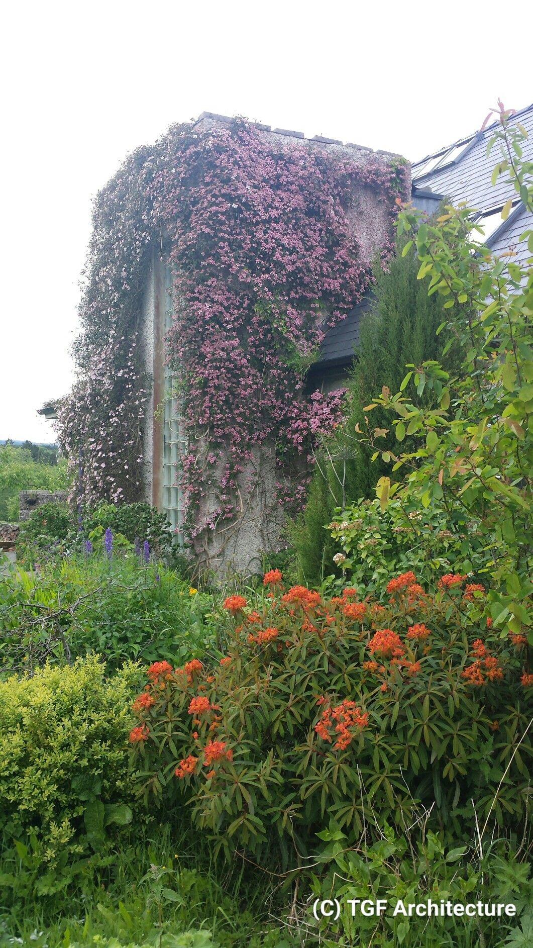 Wall planting at Sorrel Hill by Thomas G Flynn MRIAI TGF Architecture & Garden Design