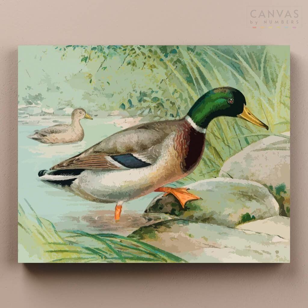 Mallard Duck J L Ridgway