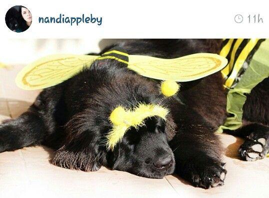 Nandi Appleby