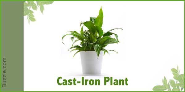 Dress Up Your Home With These Indoor Plants That Donu0027t Need Sunlight