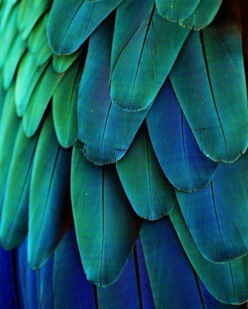 Так и хочется погладить эти прекрасные перья прекрасной птицы)