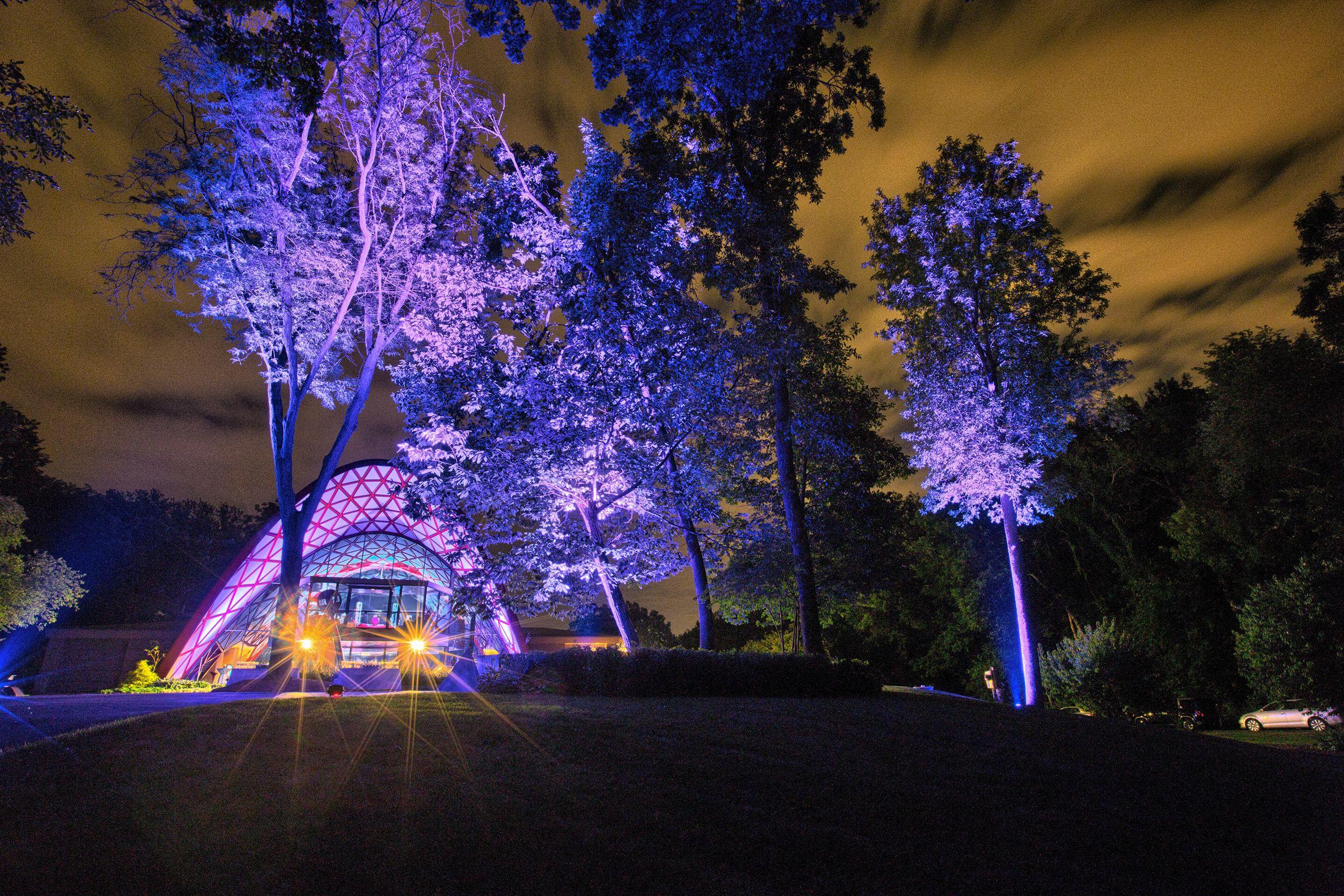 Outside Tree And Building Purple Uplighting Uplighting