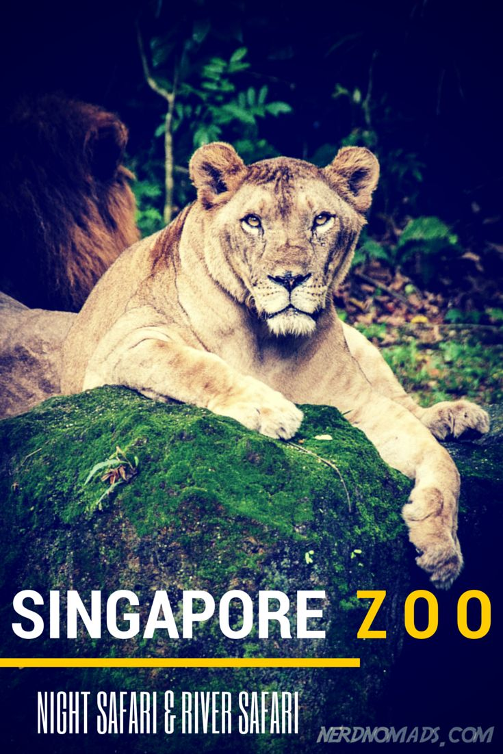 Singapore Zoo And River Safari Nerd Nomads Singapore Zoo Zoo Singapore Travel