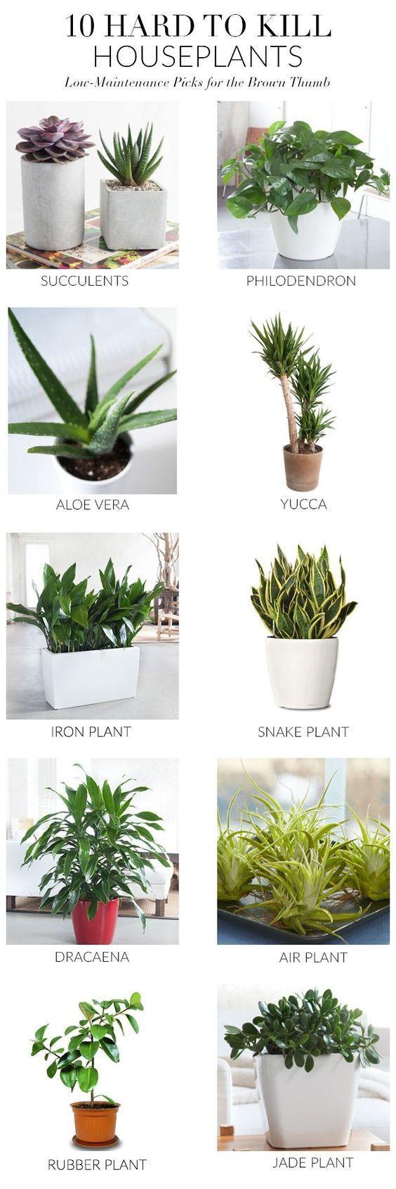 Noelito flow in plant style pinterest plants indoor