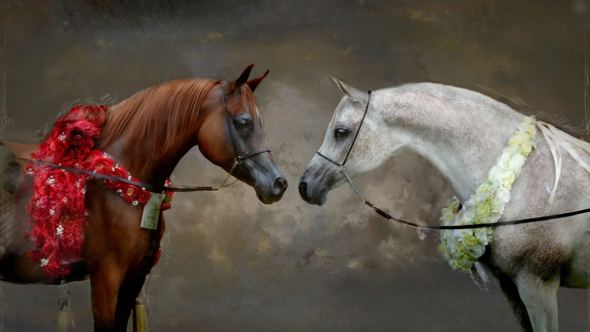 Animals category Horse Image. It is related to cavalry junk equus ...