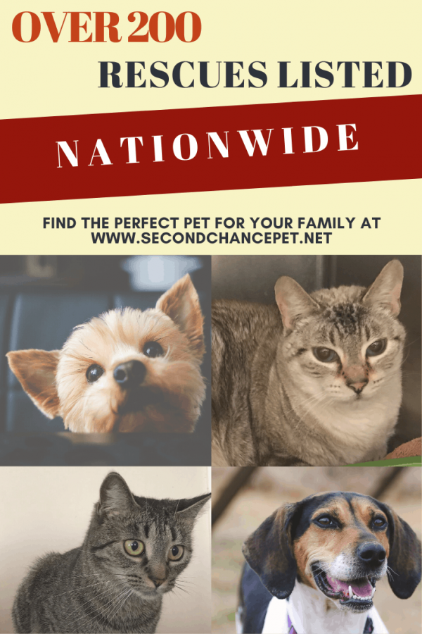 Animal Rescue Organizations By State And County Animal Shelters