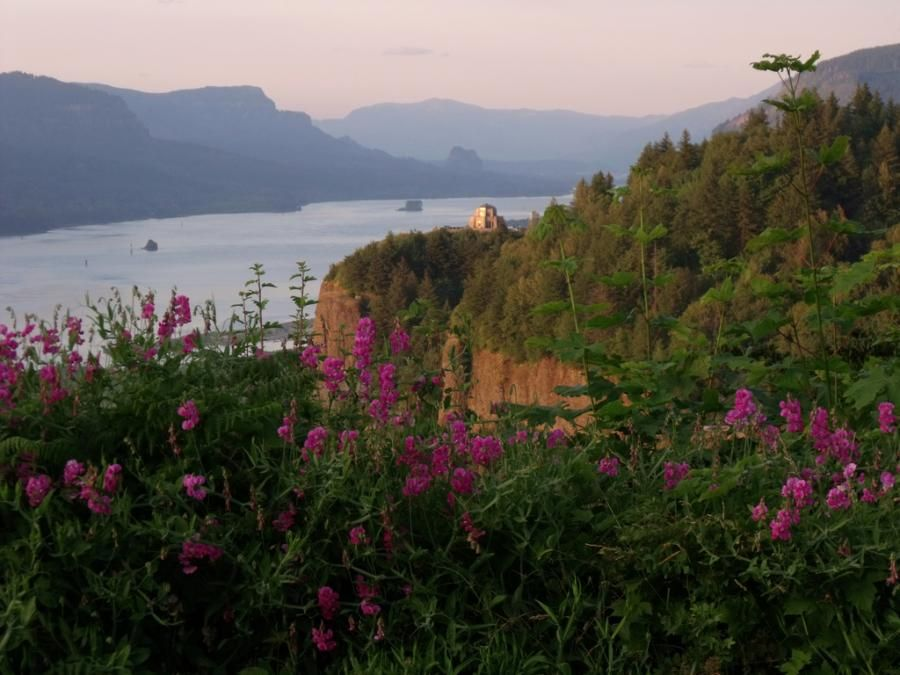 Wildflowers of the Columbia gorge - Oregon - by SarahMcD
