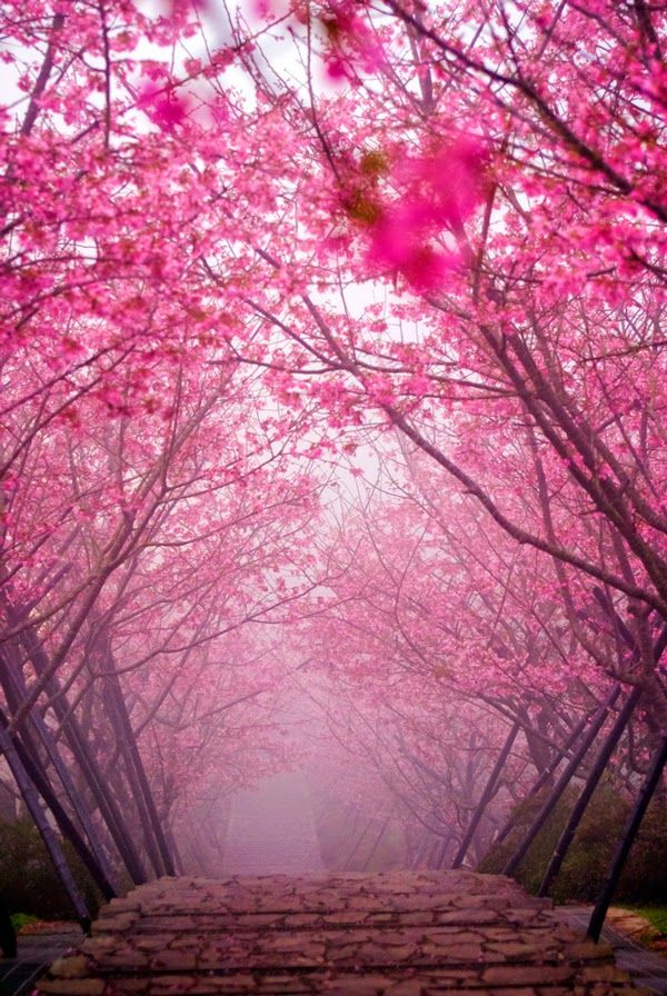 Image result for Japanese paintings and artwork bridge through blossom haze Pinterest