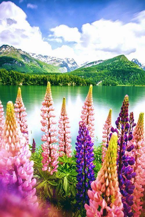 Amature Photography Engadin Switzerland Beautiful Nature