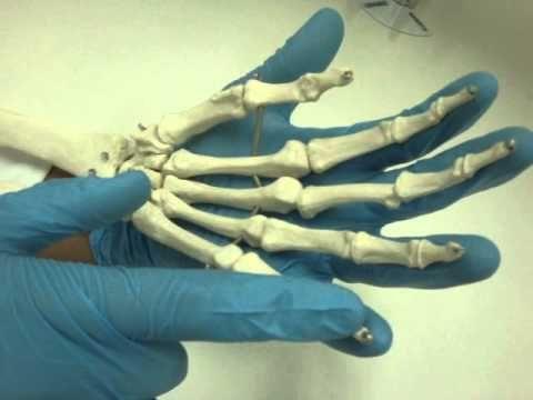 como hacer huesos - Buscar con Google