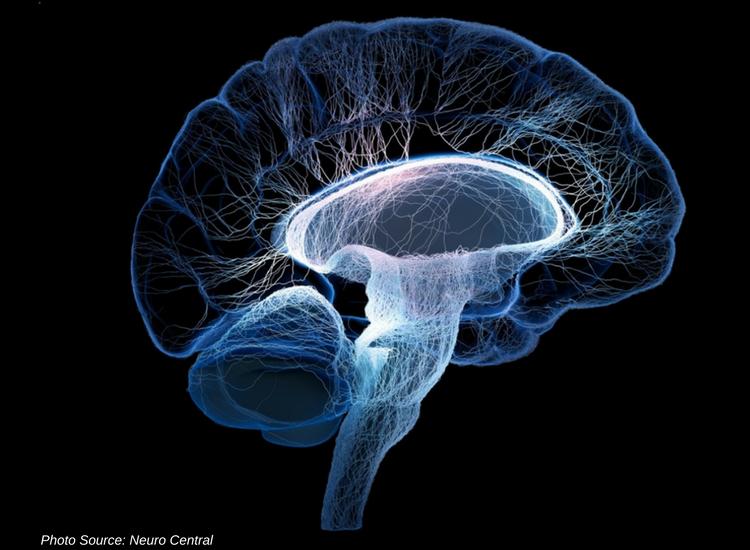 Schizophrenia and Endocannabinoid System Development