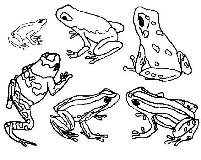Coloriage Grenouille - Google Search