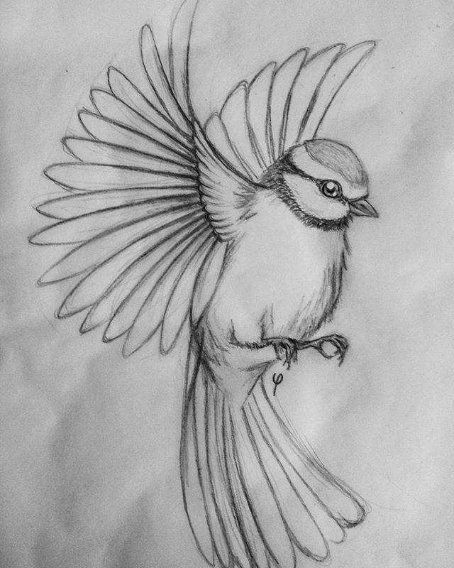 "Photo of Camilla on Instagram: ""blue tit sketch #bluetit #tomtit #bird #flying #drawing #sketch #illustration #art #artwork #blackwork #pencil #pencildrawing #blackandwhite"" – Welcome to Blog"