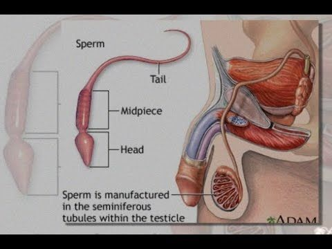 Sperm and ejact