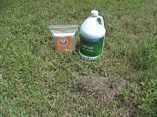 baking soda and vinegar to get rid of fire ants. This guy is funny!!! and it looks like it works!