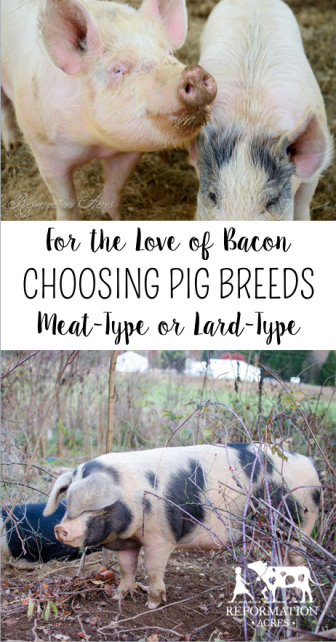 Pin On Homesteading Pigs