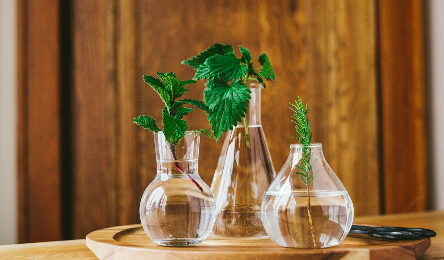 Herbs on a Budget: How to Grow from Cuttings | Lemon balm, Herbs and ...