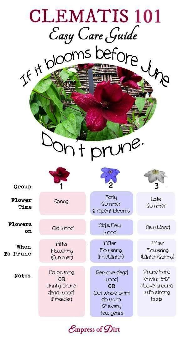Easy Care Guide  Clematis 101 Easy Care Guide  Clematis is one of the mostloved garden vines yet its not always Clematis 101 Easy Care Guide  Clematis 101 Easy Care Guide...