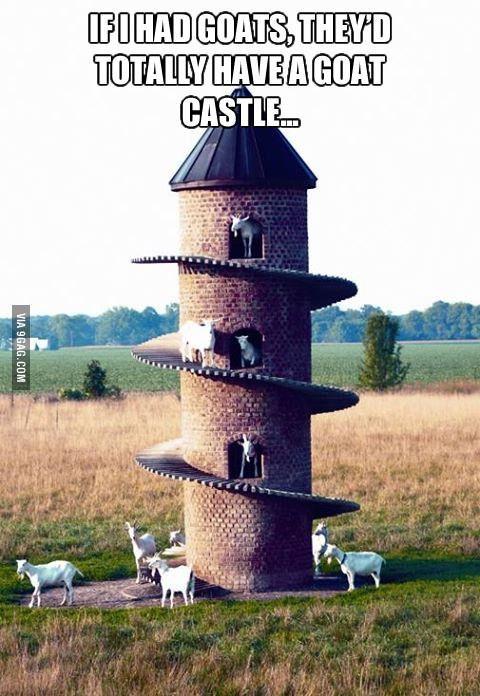If I Had Goats Goats Farm Life Cute Animals