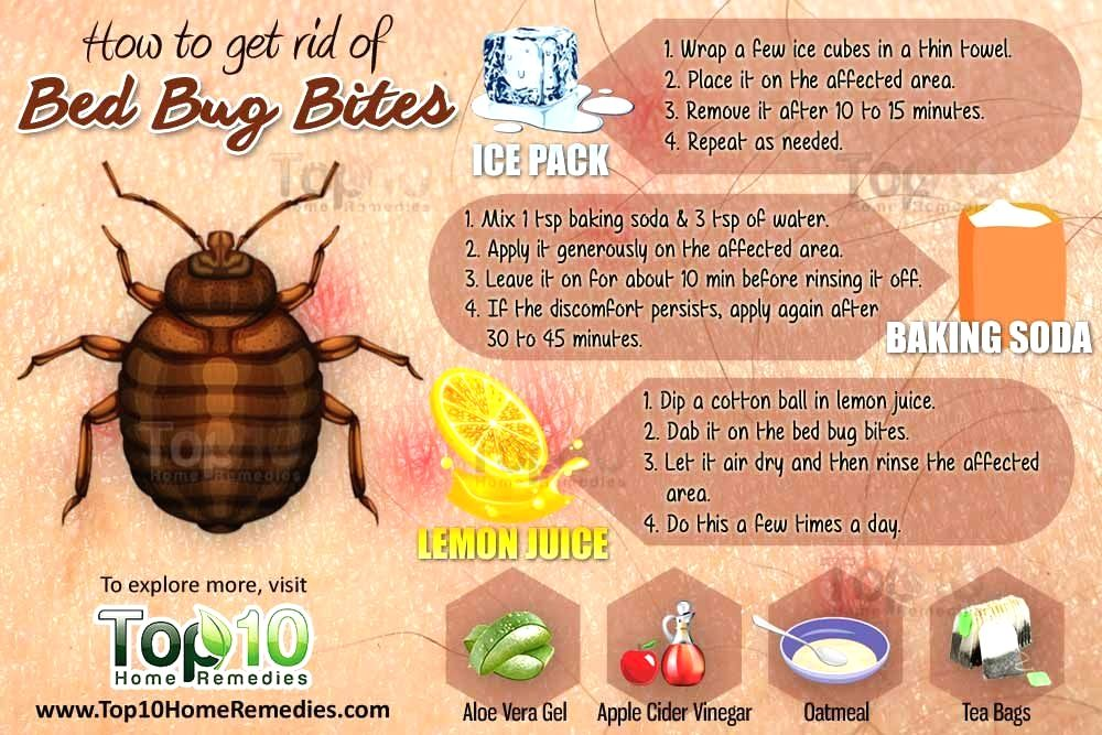 Pin by Alekseevelisei on Beauty Rid of bed bugs, Bed bug