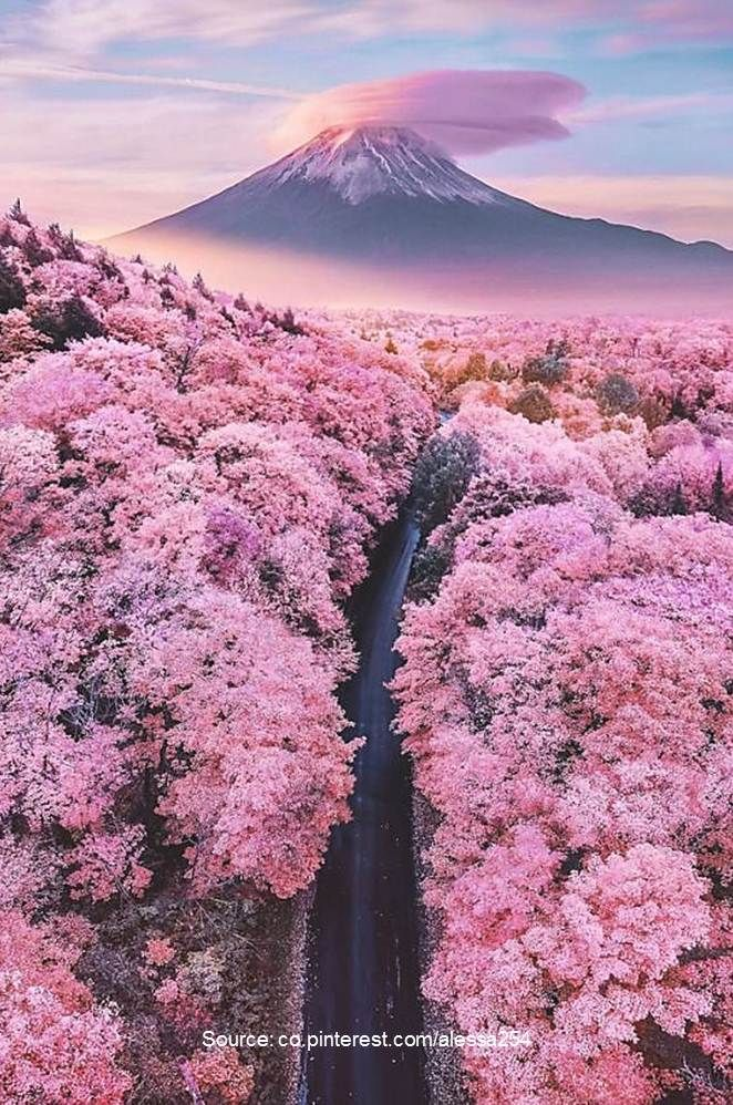 10 World's Most Stunning Flowering Tree Displays - AllOntario