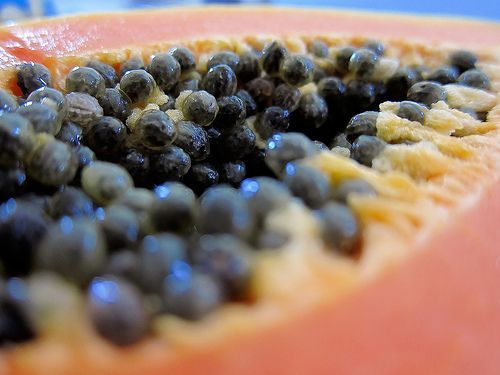 Surprising Health Benefits of Papaya Seeds The Surprising Health Benefits of Papaya Seeds for Parasites, Liver Repair and Disease PreventionThe Surprising Health Benefits of Papaya Seeds for Parasites, Liver Repair and Disease Prevention