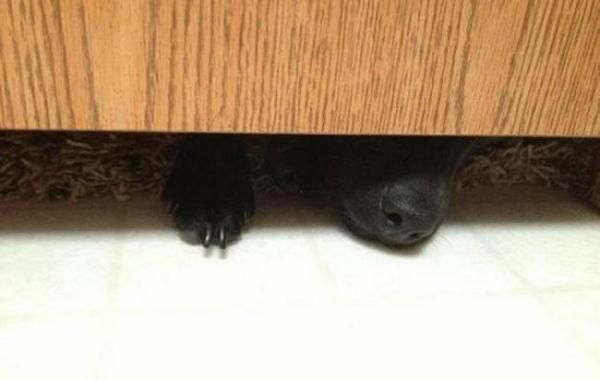 22 Simple Pleasures Only Dog People Understand Dog People Dogs Dog Bathroom